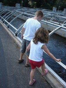 Free things to do in branson family money values for Fish farm missouri
